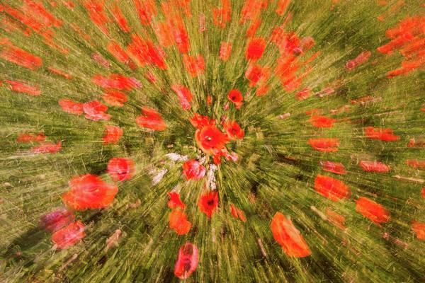 Photograph - Red Poppy Swirl by Michael Blanchette