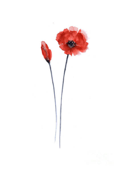 Red Poppy Mixed Media - Red Poppy Watercolor Painting Fine Art Print by Joanna Szmerdt