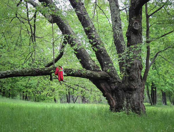 Photograph - Red Raincoat And Tree by Mary Lee Dereske