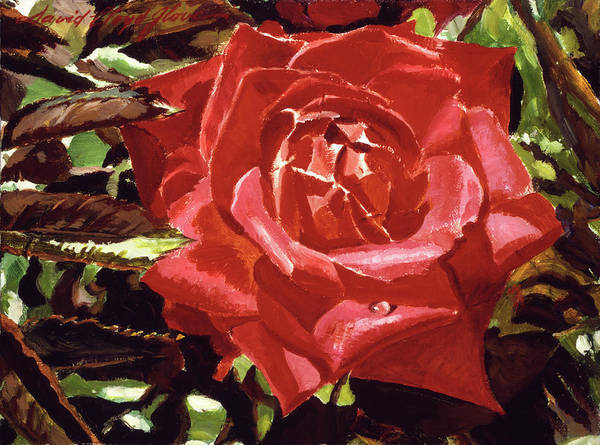 Red Rose Painting - Red Raindrop by David Lloyd Glover