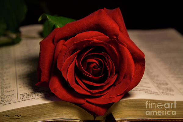 Photograph - Red Red Rose by Mechala Matthews