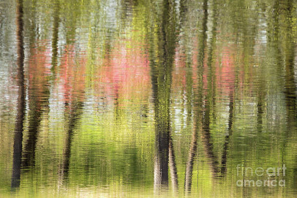 Photograph - Red Reflections by Lori Dobbs