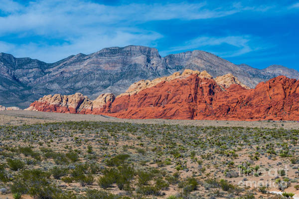 Photograph - Red Rock Canyon by Anthony Sacco