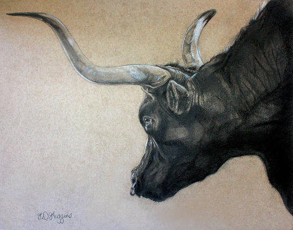 Montana Drawing - Red Rock Canyon Bull by Derrick Higgins