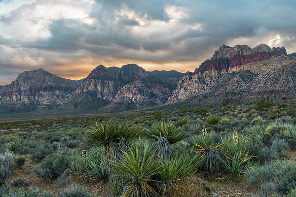 Photograph - Red Rock Canyon by Chuck Jason