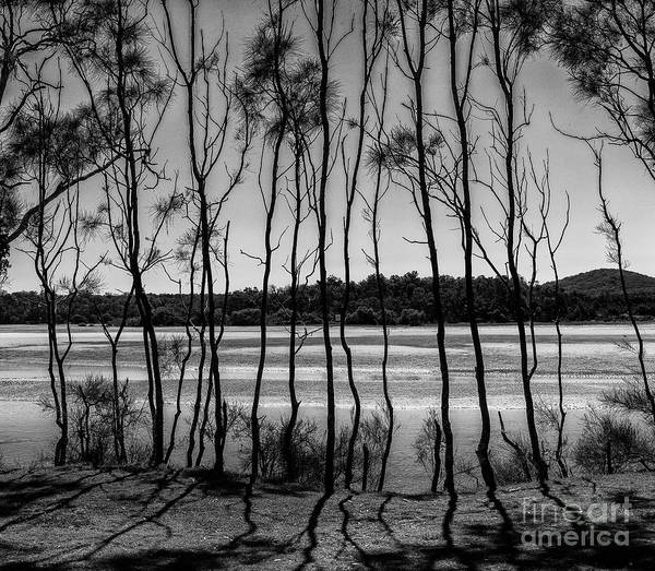 Wall Art - Photograph - Red Rock She Oaks In Monochrome by Sheila Smart Fine Art Photography