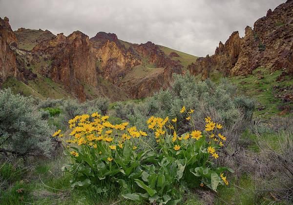 Balsamorhiza Sagittata Photograph - Red Rock Sunflowers by Idaho Scenic Images Linda Lantzy