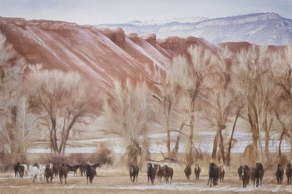Wall Art - Photograph - Red Rocks And Horses by Pamela Steege