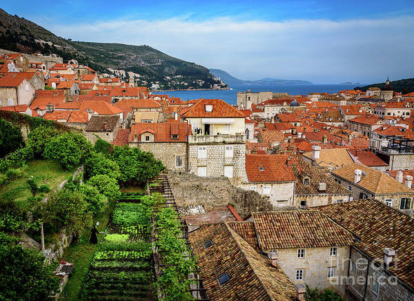 Photograph - Red Roofs And Rooftop Garden From The City Walls, Dubrovnik, Croatia by Global Light Photography - Nicole Leffer