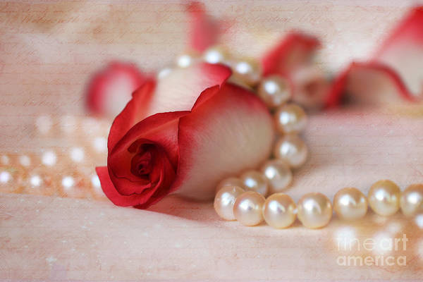 Photograph - Red And White Rose Bud With Strand Of Pearls by Teresa Zieba