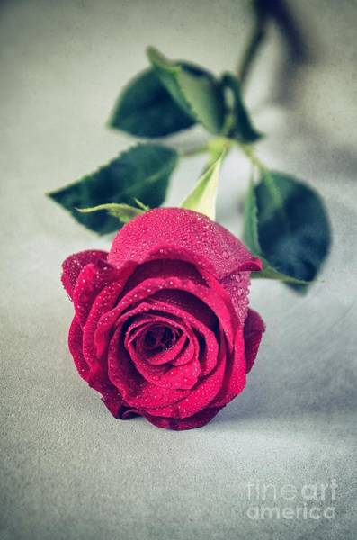 Wet Rose Wall Art - Photograph - Red Rose by Carlos Caetano