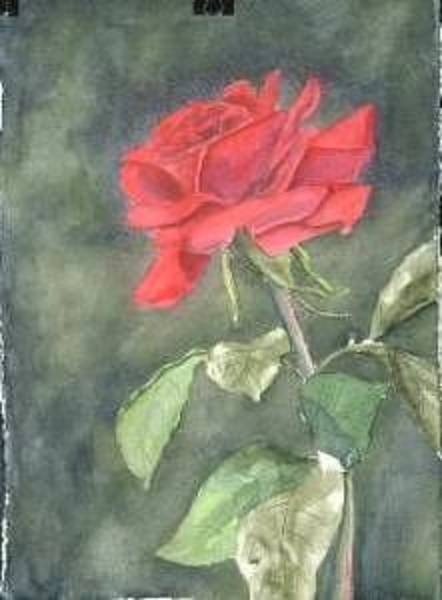 Painting - Red Rose  by Diane Ziemski