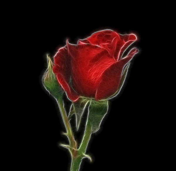 Photograph - Red Rose II by Sandy Keeton