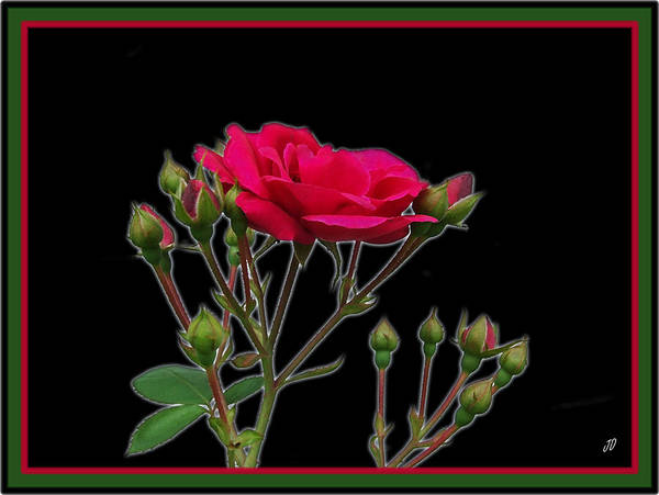 Wall Art - Photograph - Red Rose by Jim  Darnall