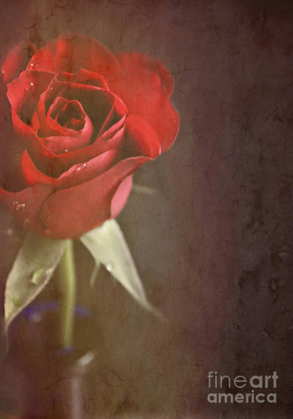Wall Art - Photograph - Red Rose by Lyn Randle