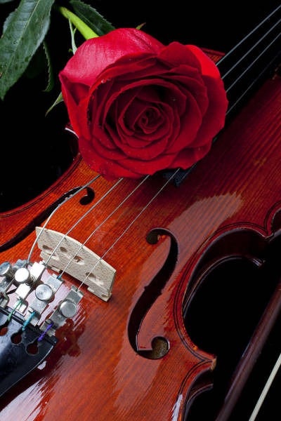 Wet Rose Wall Art - Photograph - Red Rose With Violin by Garry Gay