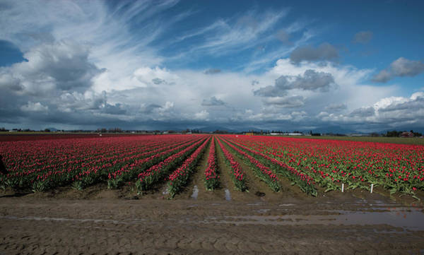 Photograph - Red Rows And Darkening Skies by Tom Cochran