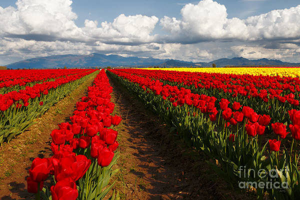 Photograph - Red Rows by Beve Brown-Clark Photography