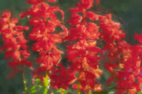 Painting - Red Salvia In The Evening Sun by Bill McEntee