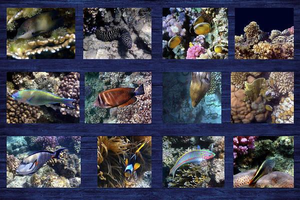 Photograph - Red Sea Sealife Collage 3 by Johanna Hurmerinta