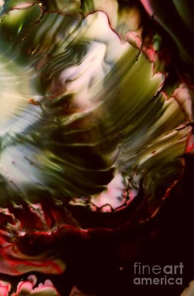 Organic Abstraction Mixed Media - Red Shell by Lisa Roberts