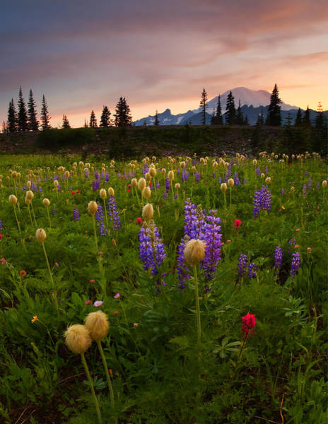 Lupines Photograph - Red Sky Meadow by Mike  Dawson