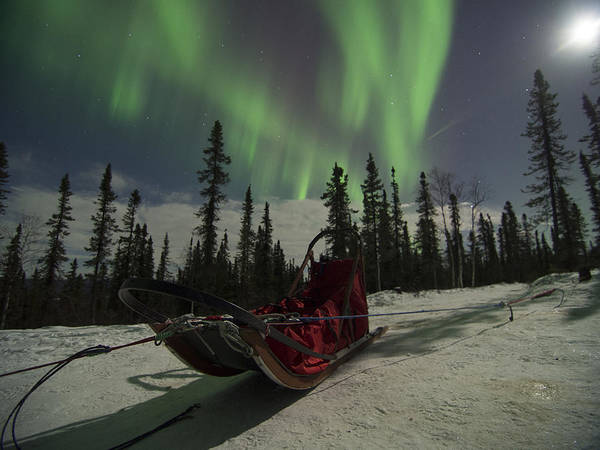 Photograph - Red-sled Aurora by Ian Johnson