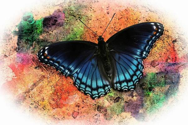 Photograph - Red- Spotted Purple Butterfly by Rusty R Smith