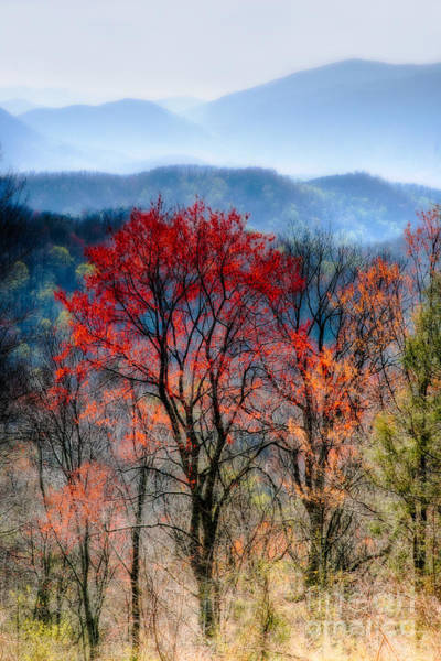 High Dynamic Range Imaging Photograph - Red Spring by Irene Abdou