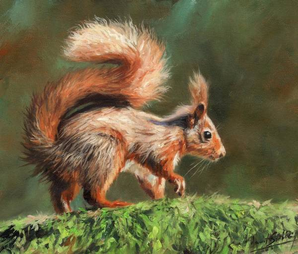Red Squirrel Wall Art - Painting - Red Squirrel On Branch by David Stribbling