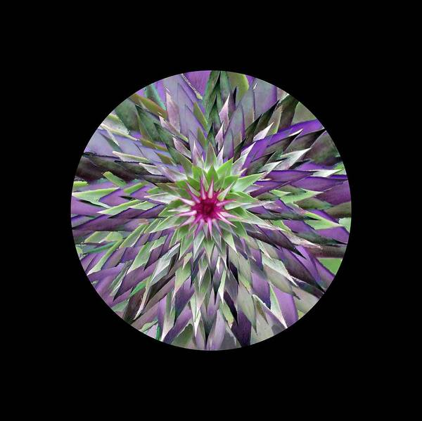 Digital Art - Red Star Thistle Kaleidoscope by Julia L Wright