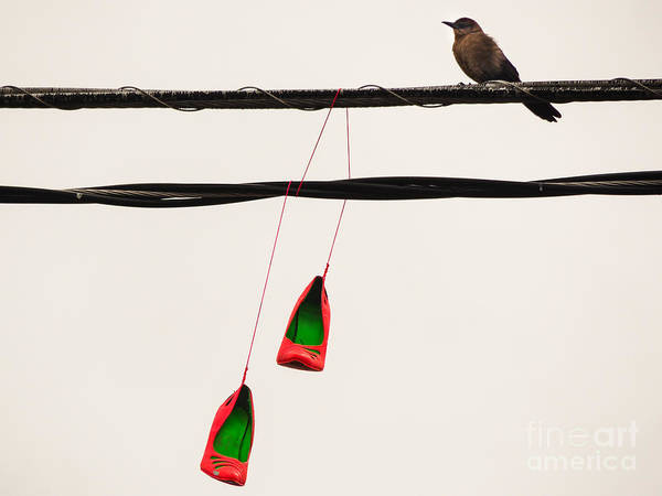 Photograph - Red Stilettos With Bird by Robin Zygelman