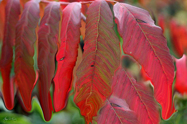 Photograph - Red Sumac Abstract by Wayne King