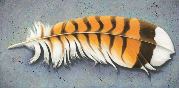 Painting - Red Tail Hawk Feather by Tish Wynne