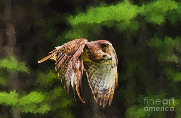 Photograph - Red Tail Hawk by Les Palenik