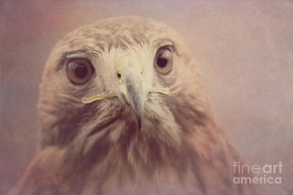 Photograph - Red-tailed Hawk 4 by Chris Scroggins
