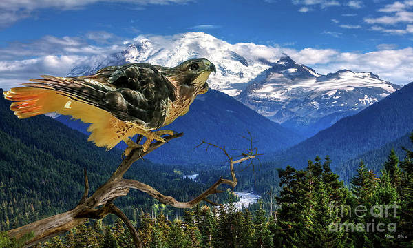 St Louis Cardinals Mixed Media - Red Tailed Hawk, Chinook Pass, Mt. Ranier by Thomas Pollart