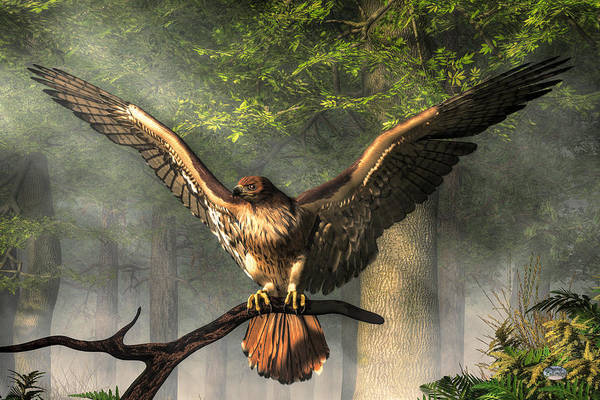 Digital Art - Red Tailed Hawk by Daniel Eskridge
