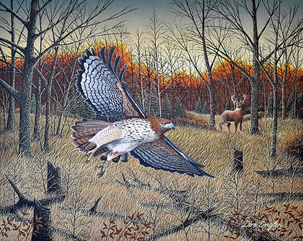 Black Buck Painting - Red-tailed Hawk by Don Engler