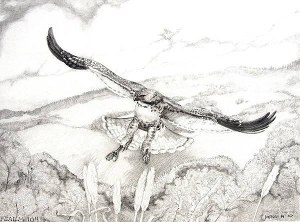 Avian Drawing - Red-tailed Hawk Of Psalm 104 by Jill Iversen