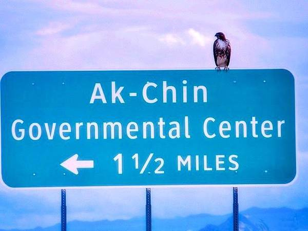 Photograph - Red-tailed Hawk On A Sign 2 by Judy Kennedy