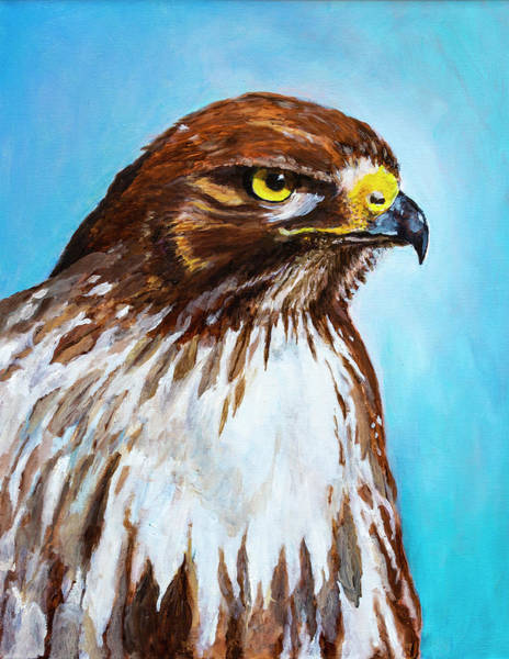 Painting - Red Tailed Hawk Portrait by Rick Mosher