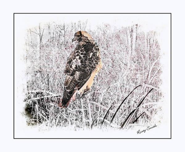 Digital Art - Red Tailed Hawk Portrait. by Rusty R Smith