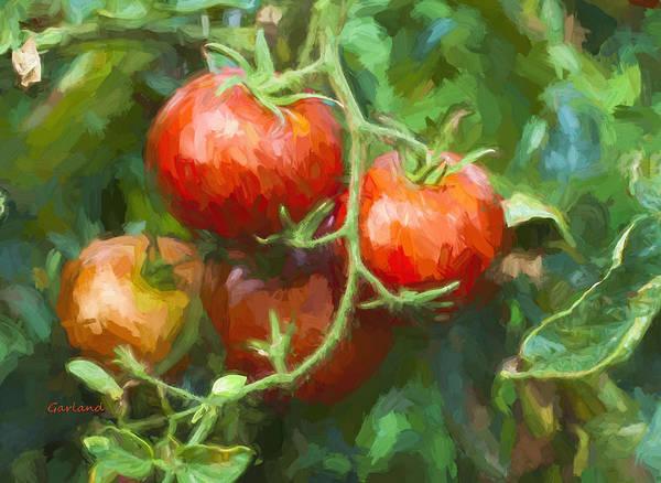 Ingredient Digital Art - Red Tomatoes  by Garland Johnson