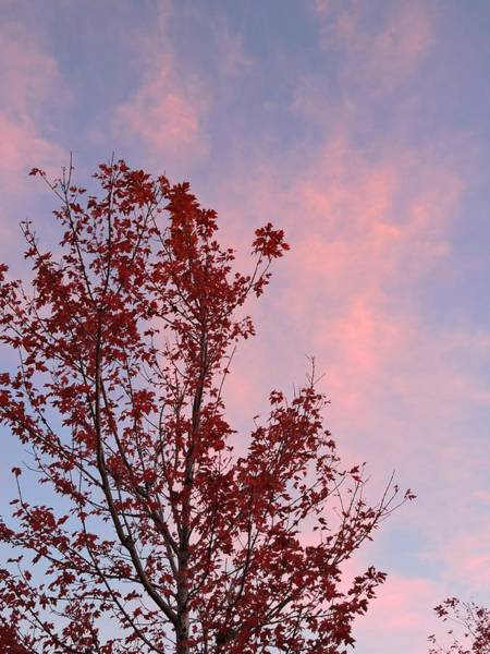 Arapahoe County Wall Art - Photograph - Red Tree At Sunset by Connor Beekman
