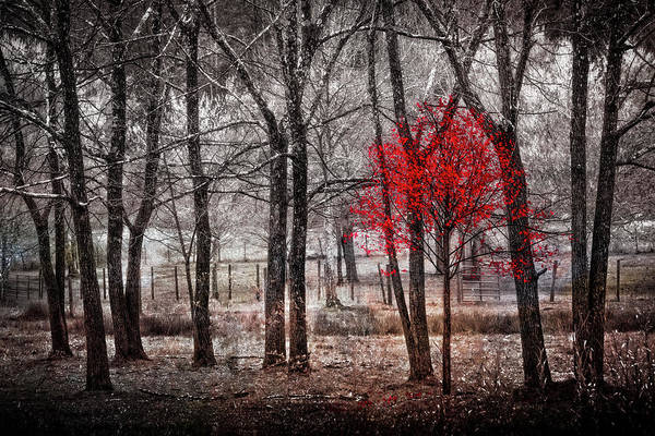 Wall Art - Photograph - Red Tree by Debra and Dave Vanderlaan