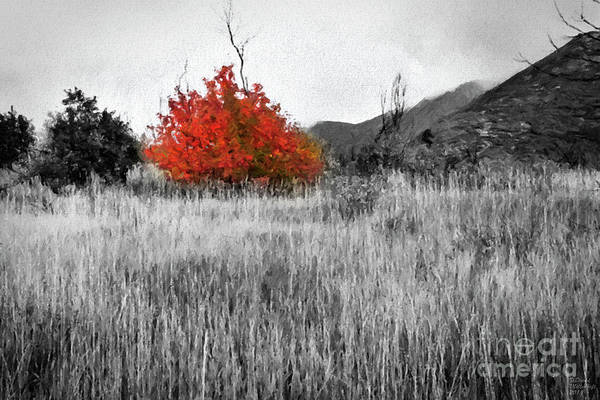 Painting - Red Tree In The Valley by David Millenheft