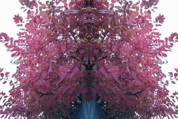 Photograph - Red Tree Leaves 2 Mirror by Julia Woodman