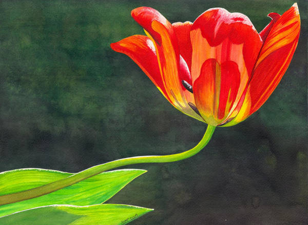 Painting - Red Tulip by Catherine G McElroy