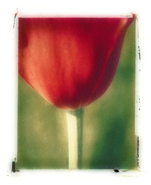 Photograph - Red Tulip by Joye Ardyn Durham
